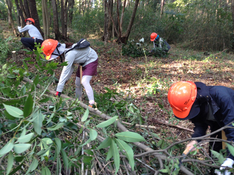 常緑樹の除伐